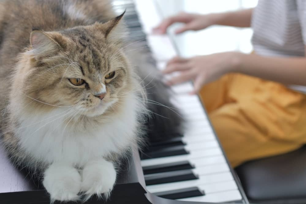 Protect Pianos From Cats